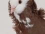 """Izstādes """"Jelgavas kaķis 2013"""" viesi"""
