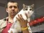 Jelgavas kaķis 2011