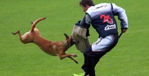 Starptautiskās IPG suņu sacensības